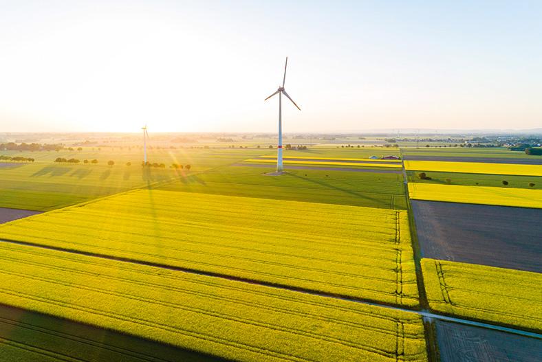 Windrad inmitten von gelb blühenden Rapsfeldern in der Nachmittagssonne.